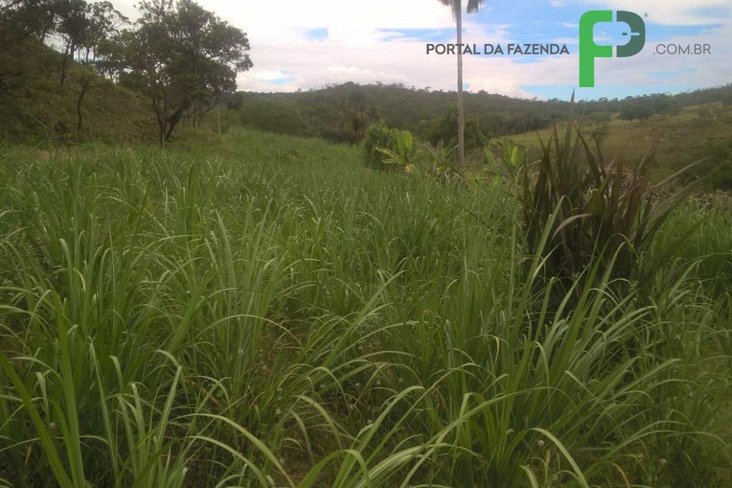 Fazenda 123ha em Presidente Olegário/MG