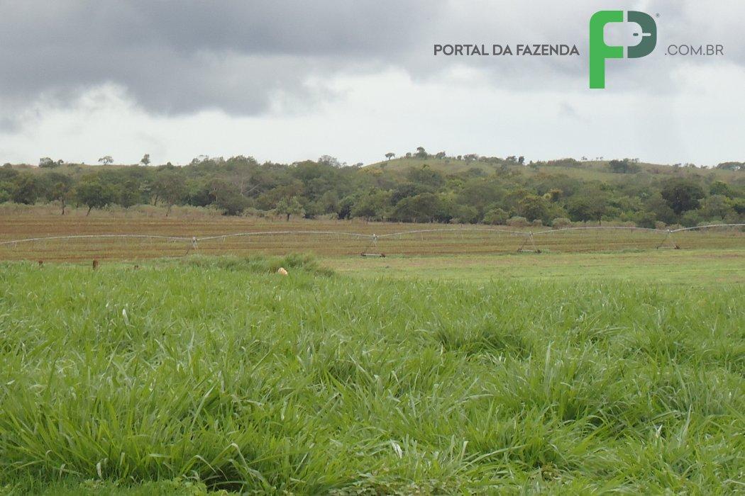 Fazenda 425ha em Lagoa Grande/MG